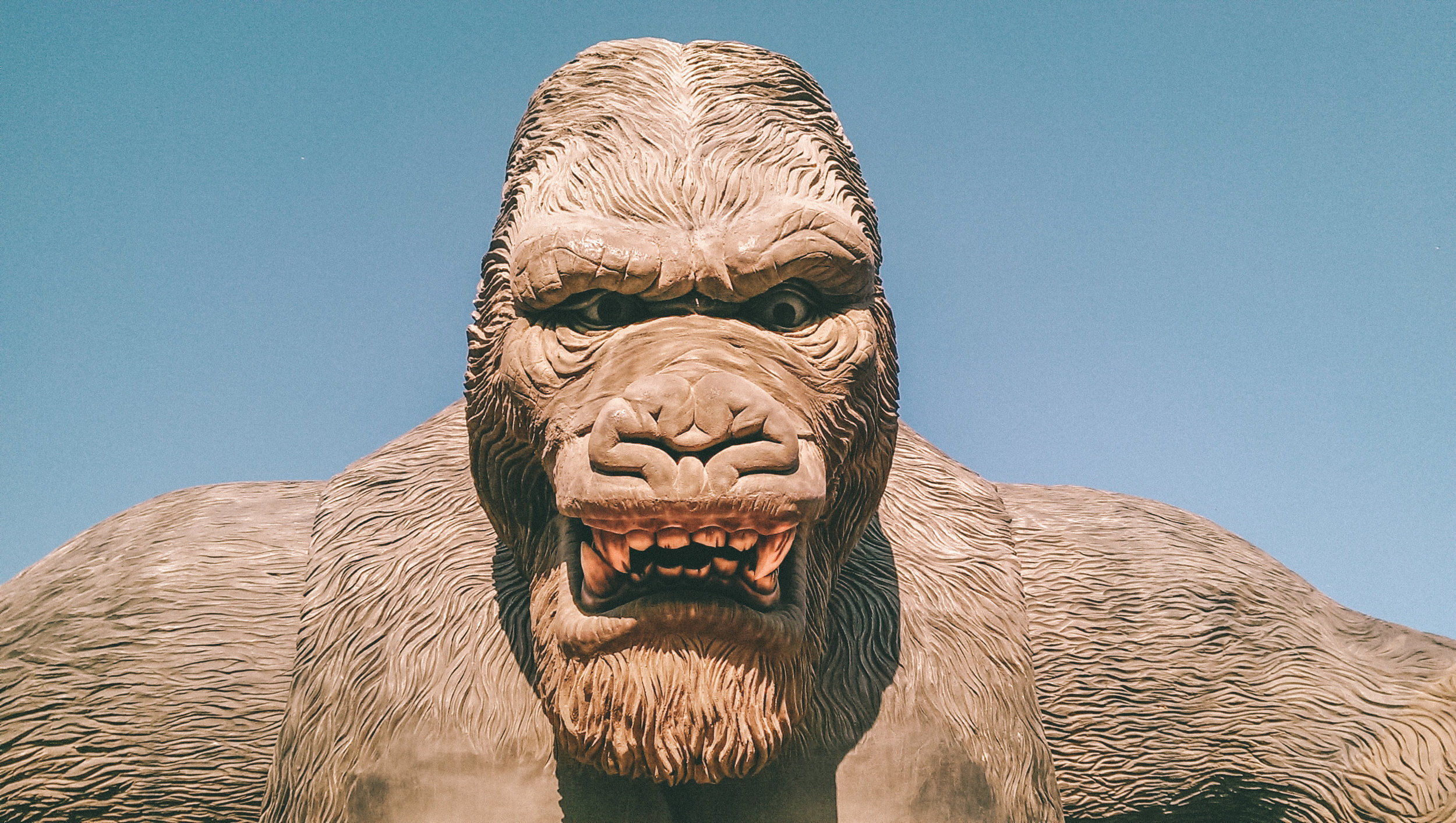 The Fundraising Talent Podcast   Hosted by Jason Lewis   Episode 51   Has donor-centrism become fundraising's eight-hundred-pound gorilla?