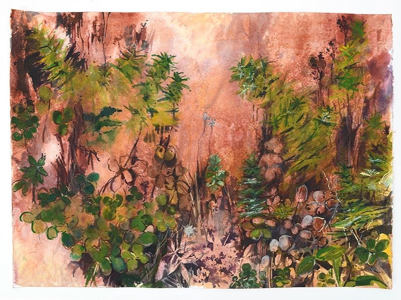Biodiversity on Mount Caburn