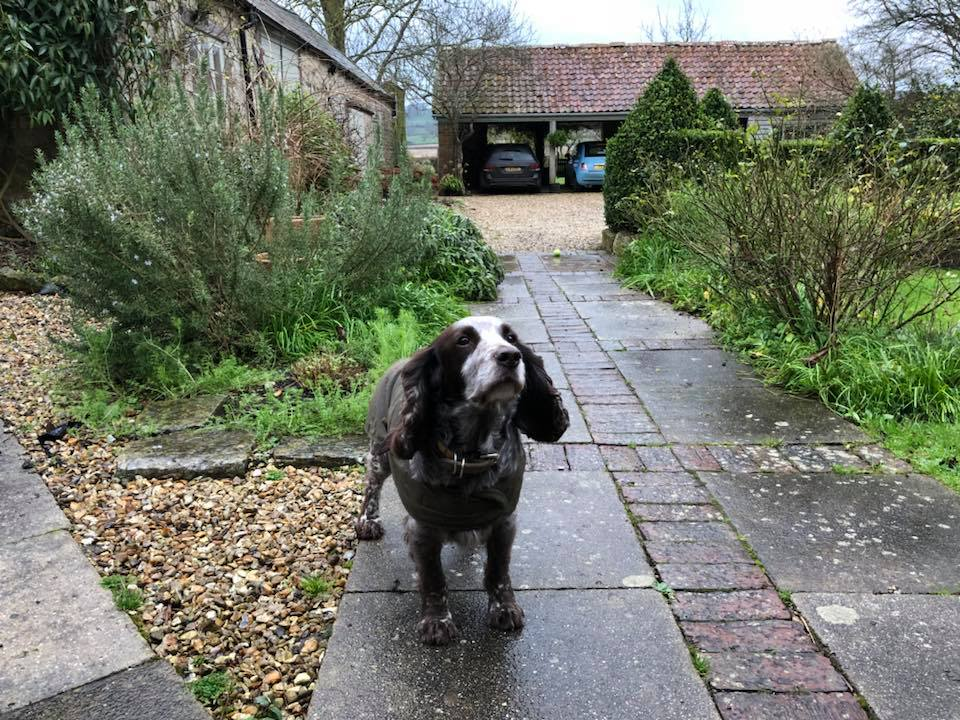 My hero, Biggles, ready for an adventure in his rain coat. Back garden in the background.