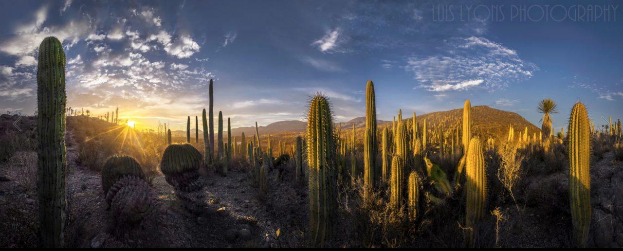 Preserving Sacred Land in the Wirikuta Desert -