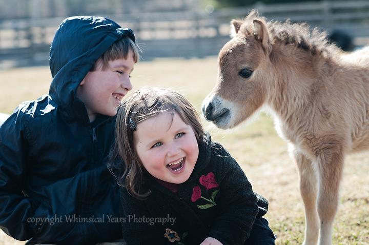 Miniature horse foal and children