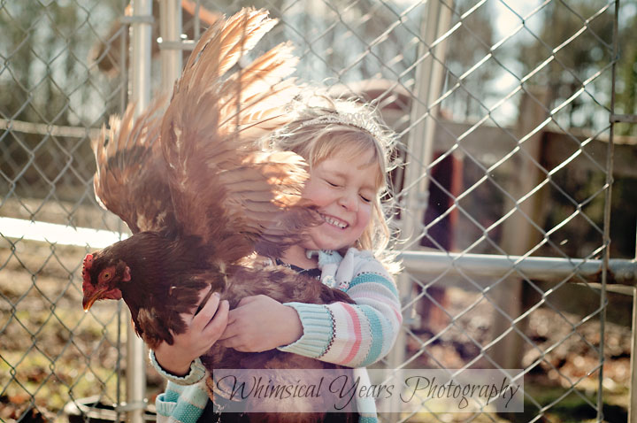 little girl holding a red hen as wings are flapping