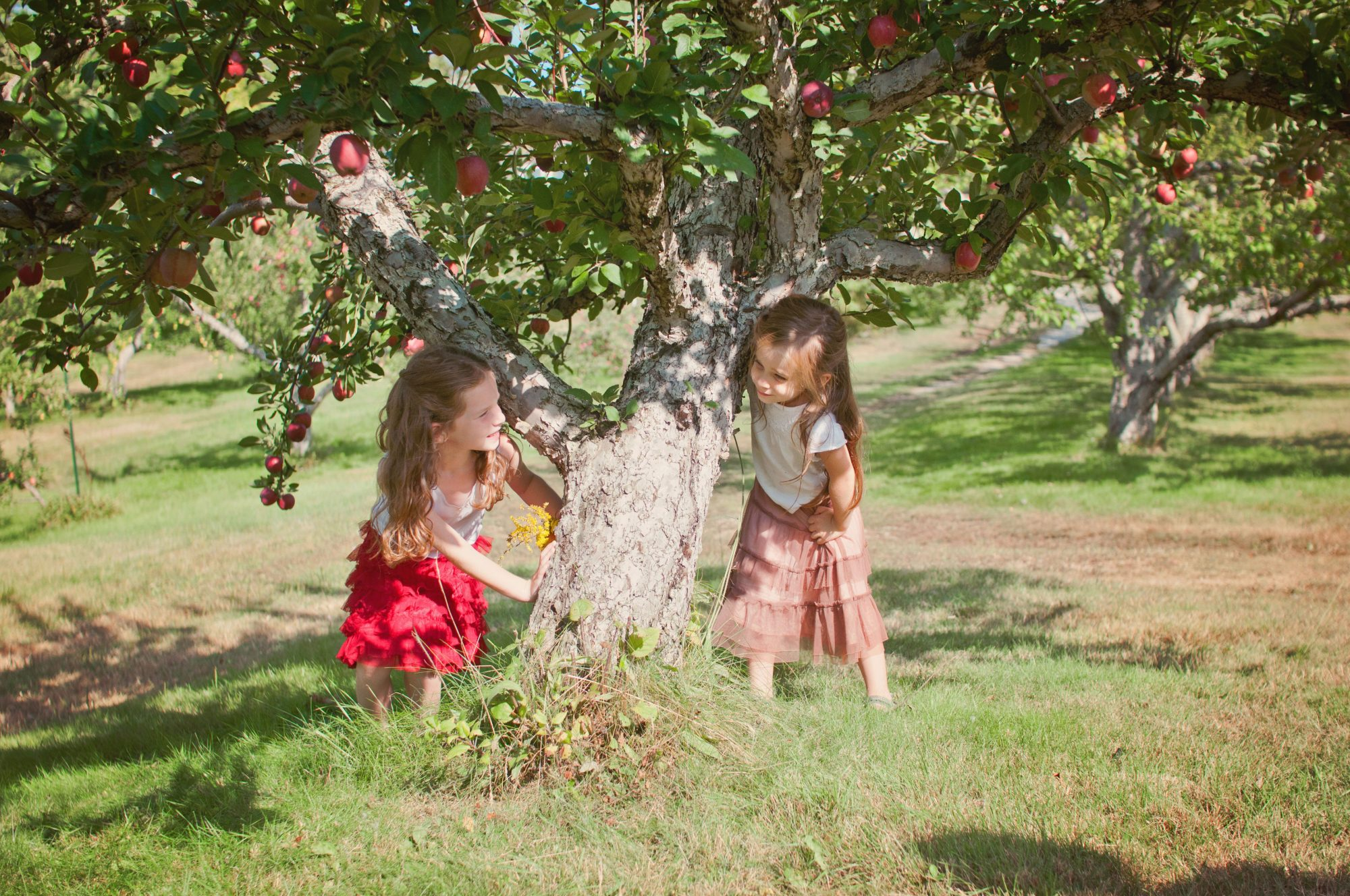 Two sisters playing at an apple orchard