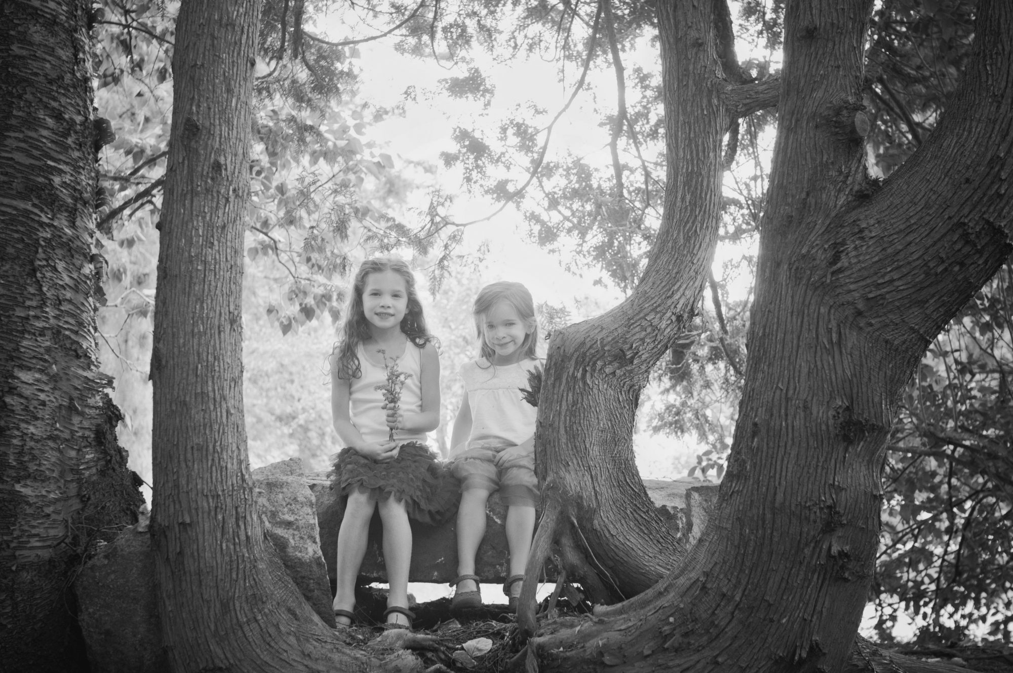 Two sisters sitting among a cedar grove