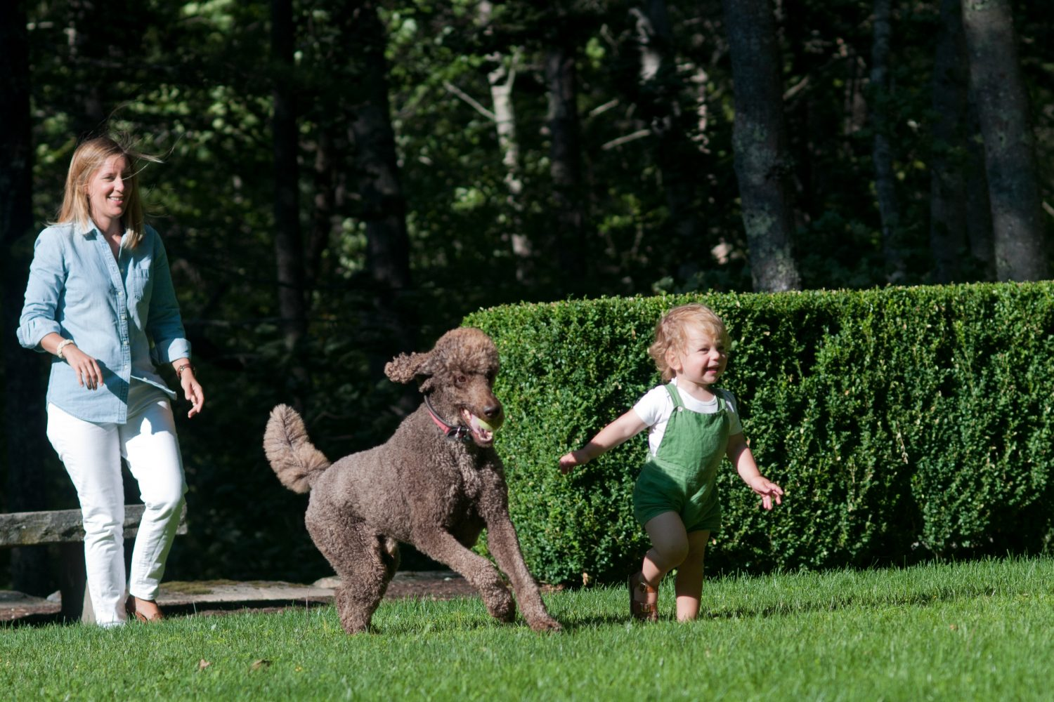 Little boy running with standard poodle in the lawn