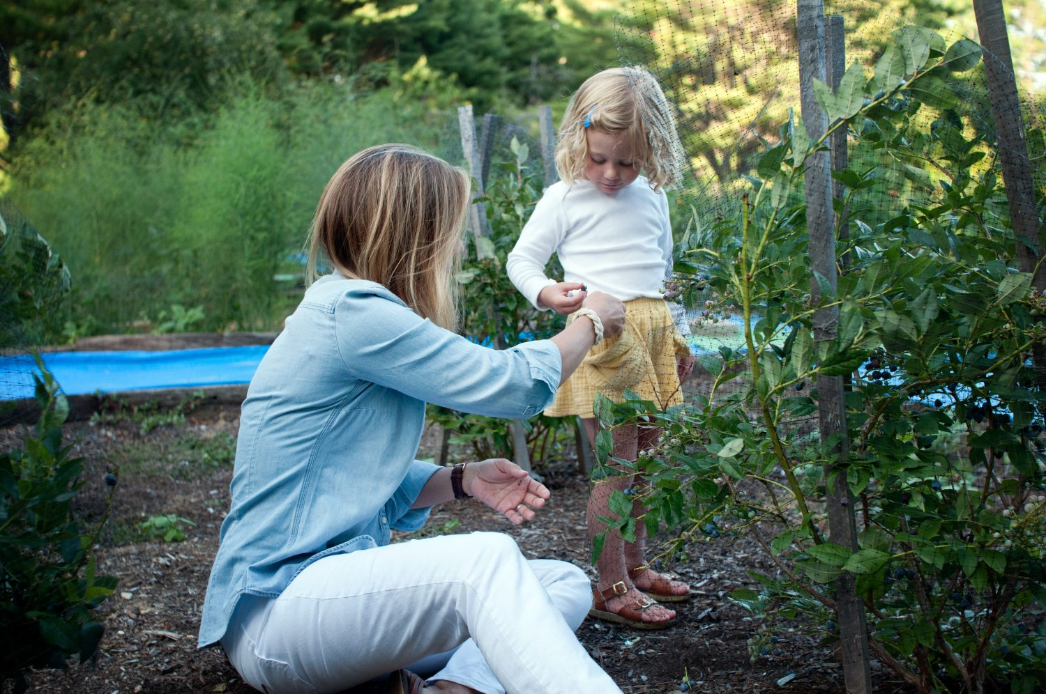 mother and young daughter picking blueberries
