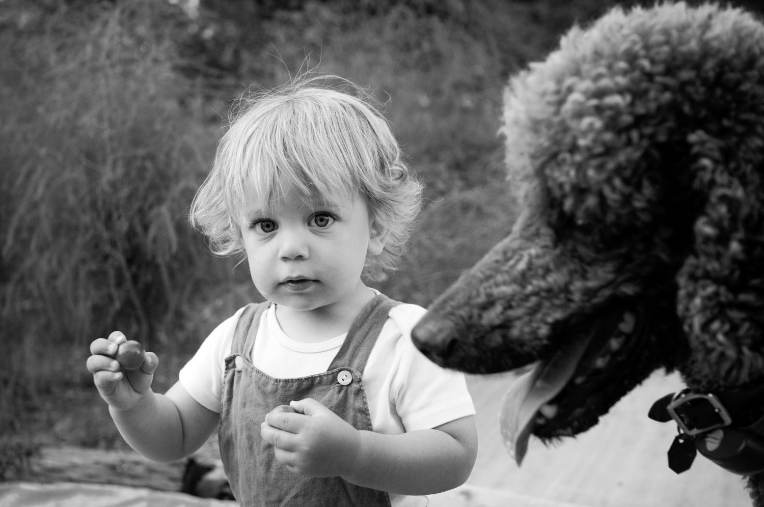black and white photo of toddler boy holding a small tomato with standard poodle next to him