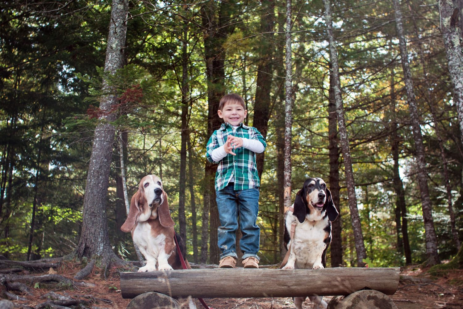 little boy standing on log with basset hounds on each side of him