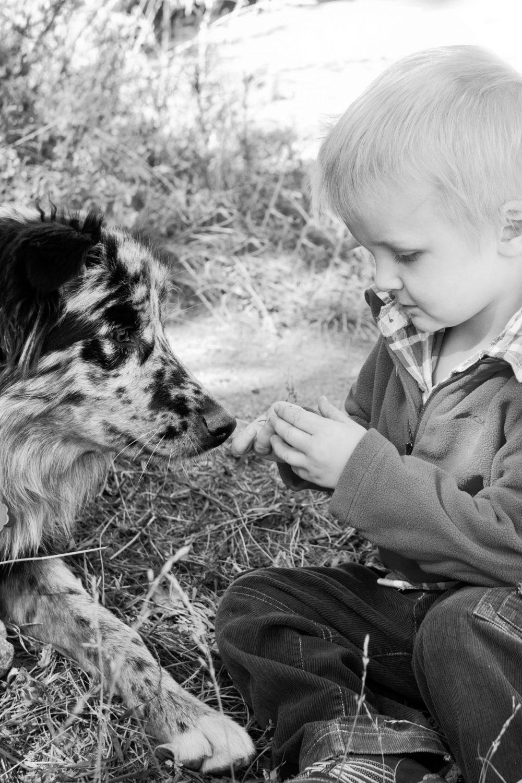 black and white photo of toddler boy with australian shepherd sitting on grass