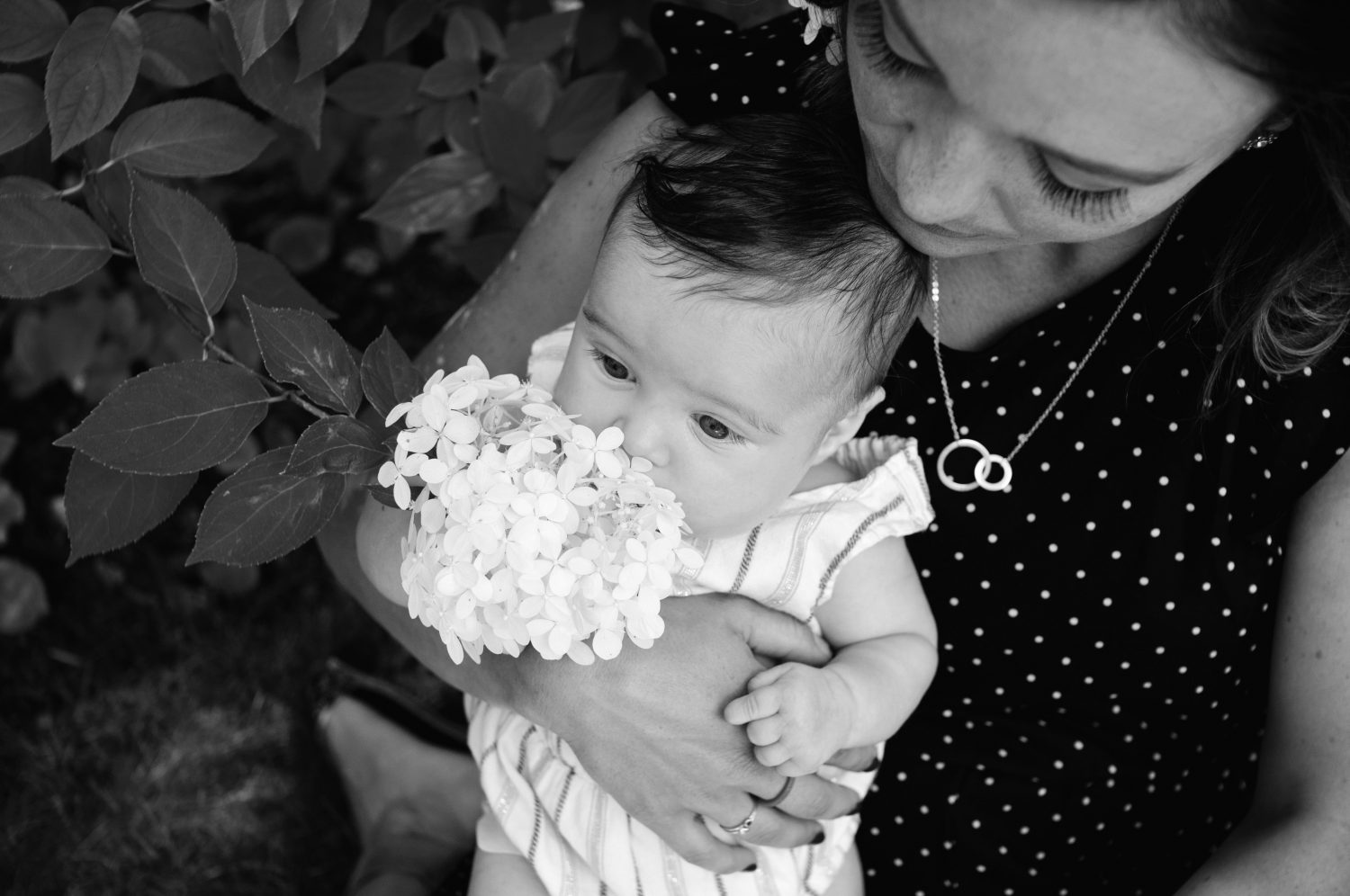 black and white photo of baby girl sniffing hydrangeas in mothers lap