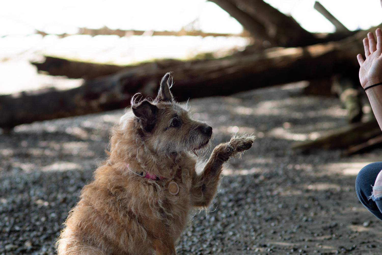 Older dog waving at owner as she waves back
