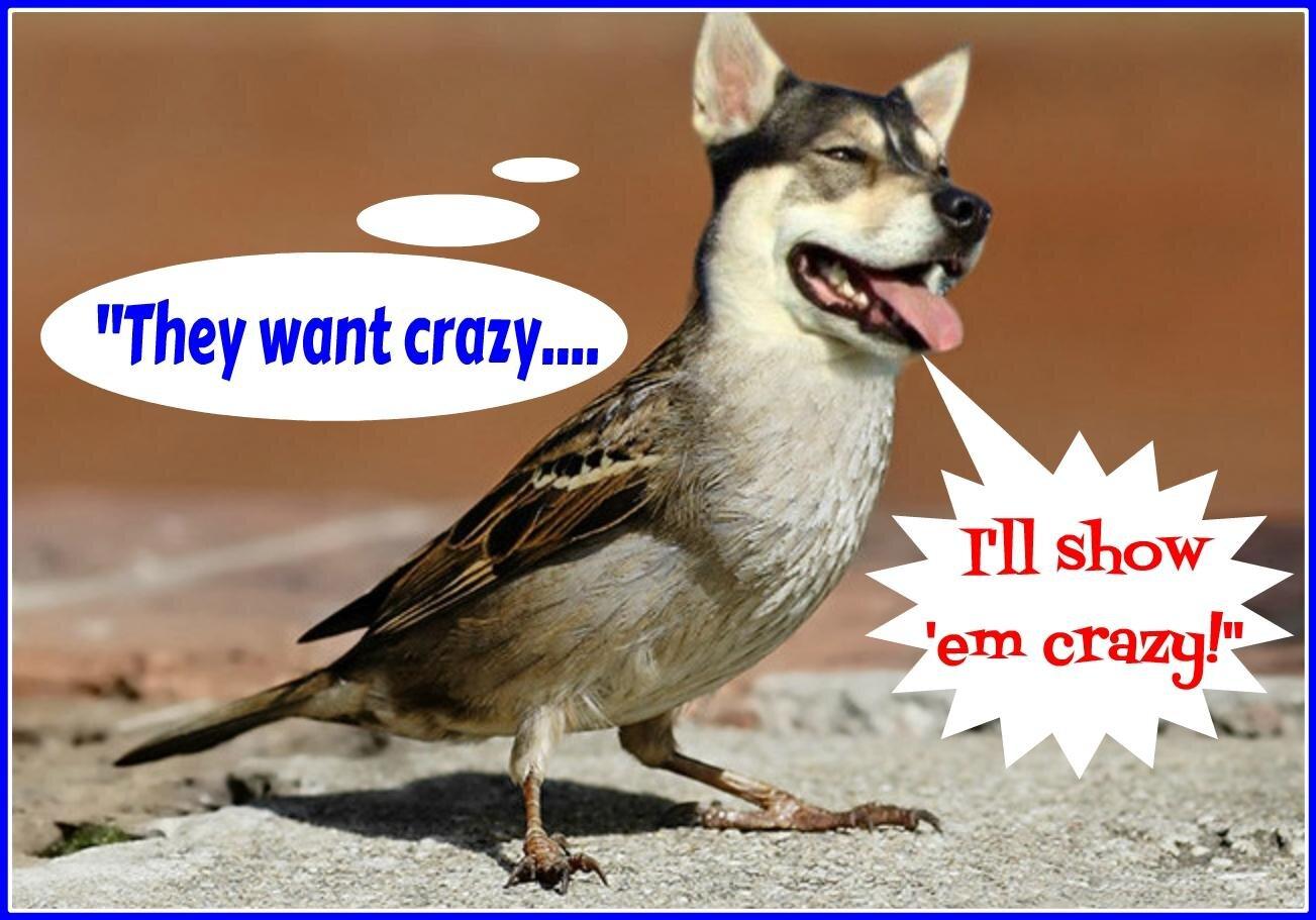 .a dr dinar dogs fly.jpg