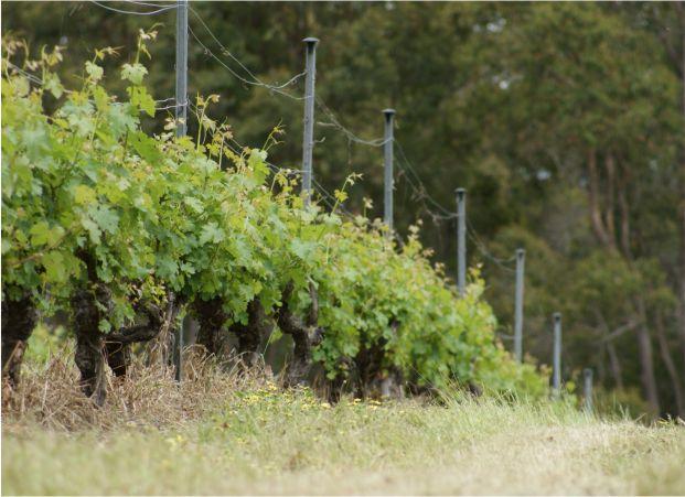 vineyard_vineyard.jpg