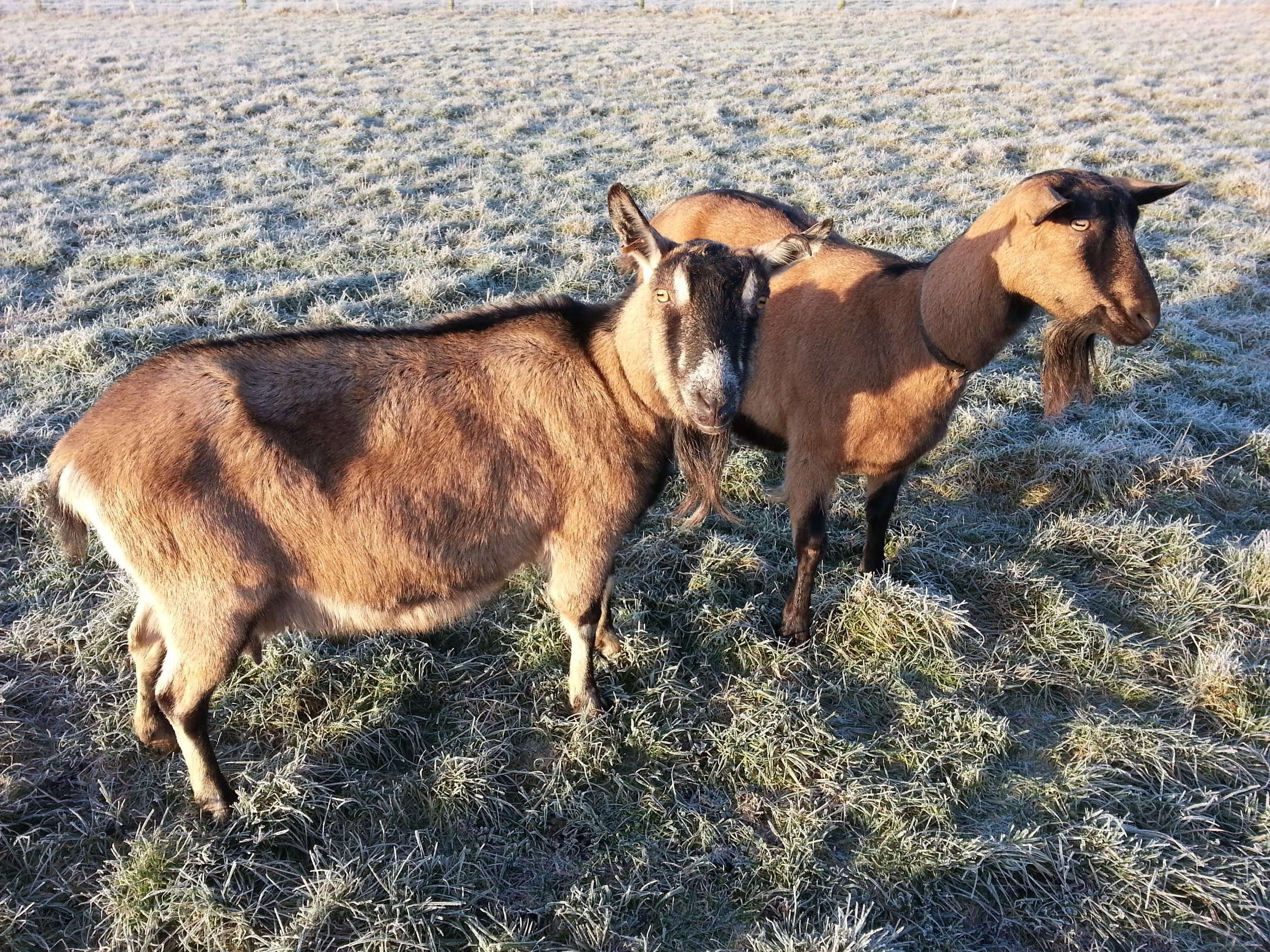 20150120_Bluebell and Mischief.jpg