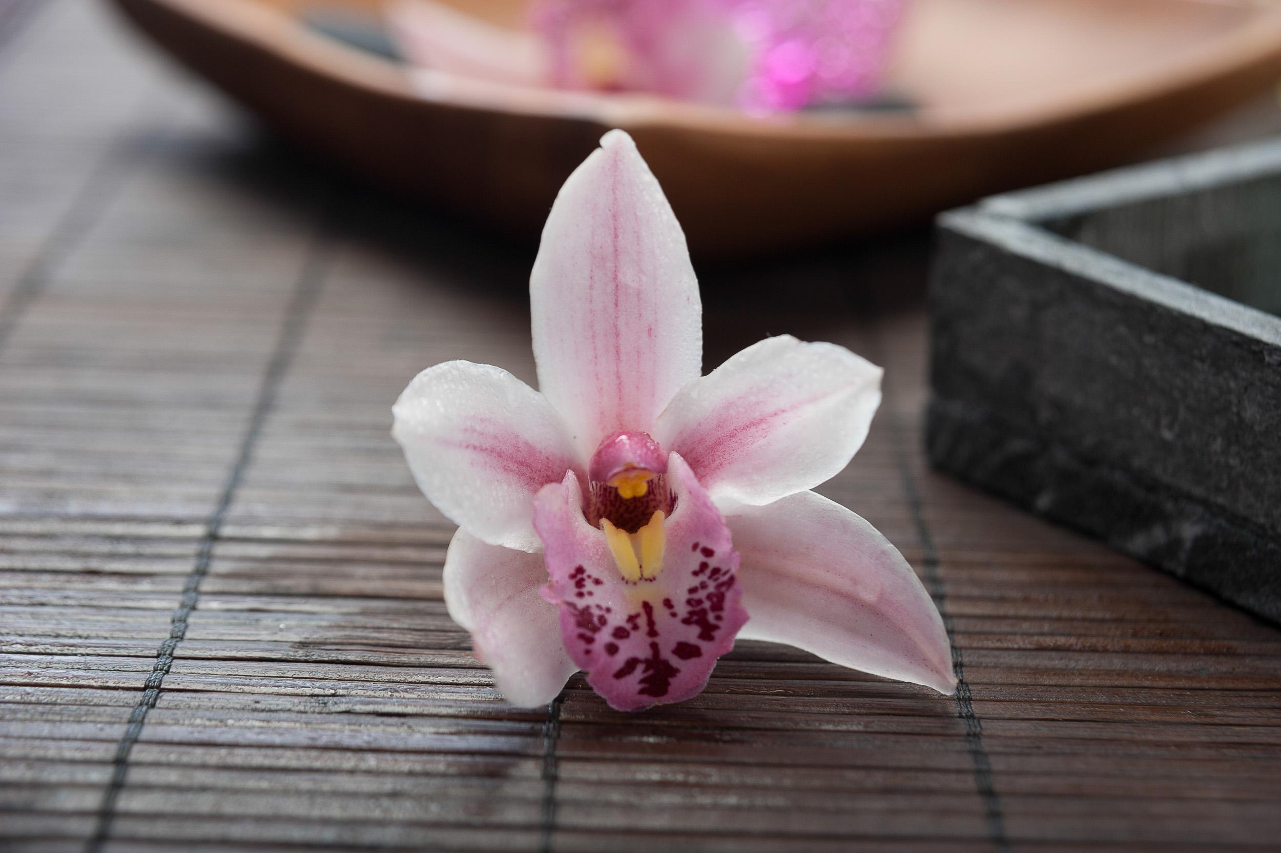 Aroma-Thai-Massage-Berlin-11Impressionen.jpg