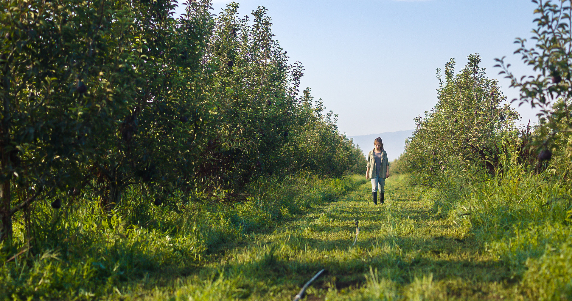 Photo 6 ANDY_WALKING_WIDE_ORCHARD_100_A_001.jpg