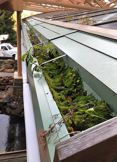 Gutter Cleaning - Leave the dirty work to us. We work from ladders using the best gutter cleaning tools, so you don't have to!