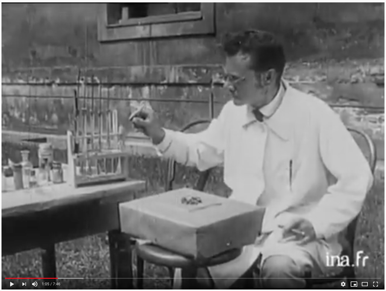 """Karl von Frisch """"Le langage des abeilles"""" (The Dancing Bees, 1934, YouTube)"""