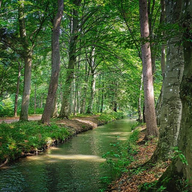 forest-3630487_960_720.jpg