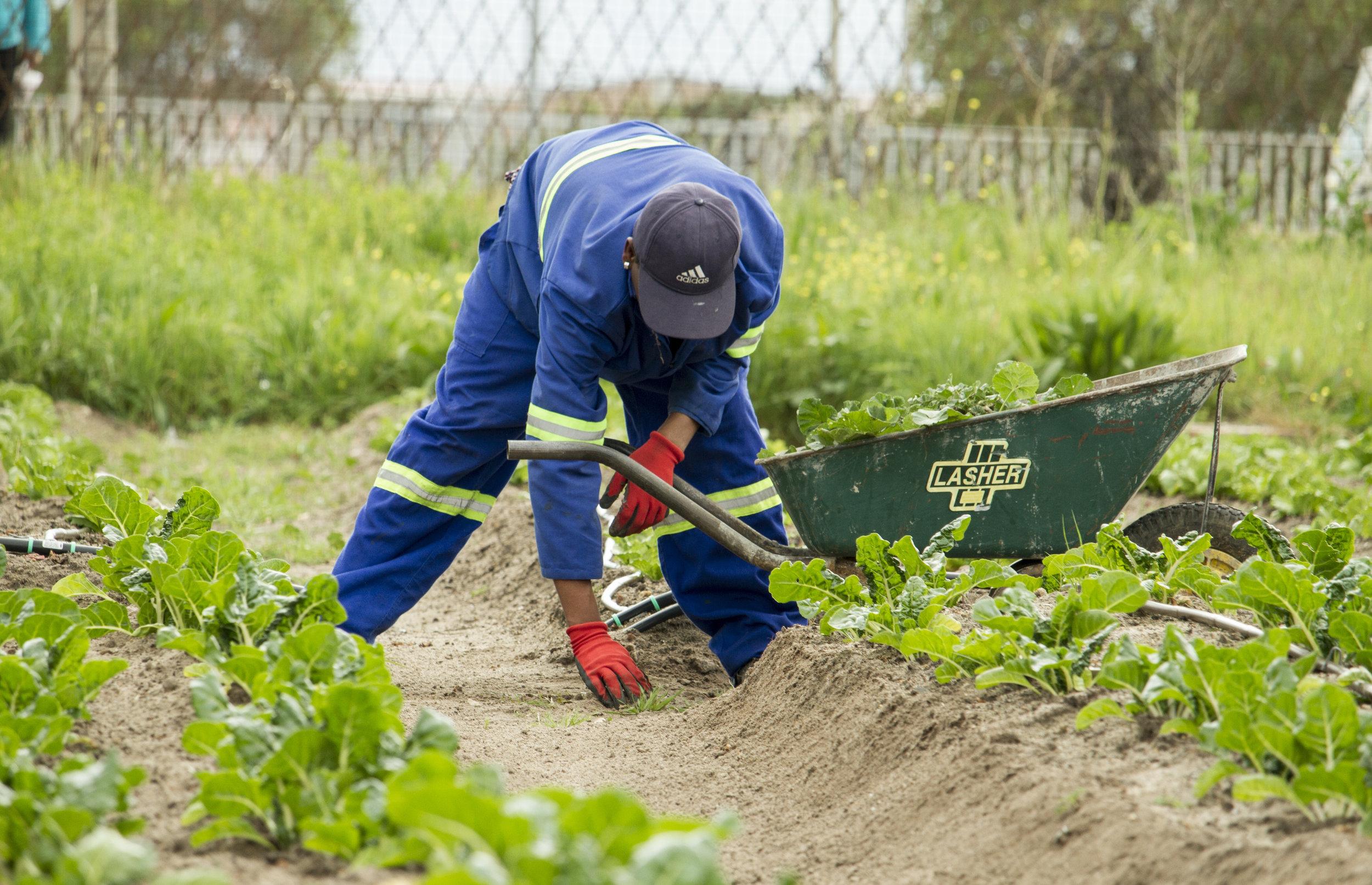 ROT-AVDRAG - Du vet väl om att du kan få skattereduktion om du låter någon annan ta hand om din trädgård?