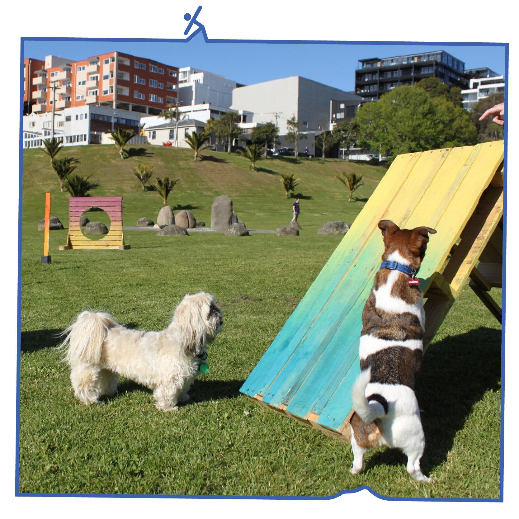 TMPW_CaseStudy__Dog Park .jpg