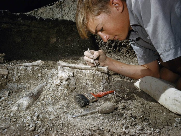 excavating+fossil.jpg