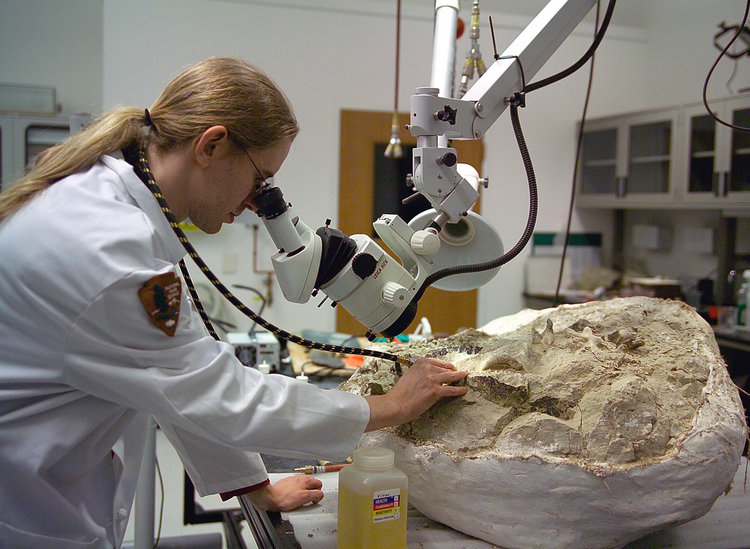 Fossil_preparation_at_the_Condon_Center_lab.jpg