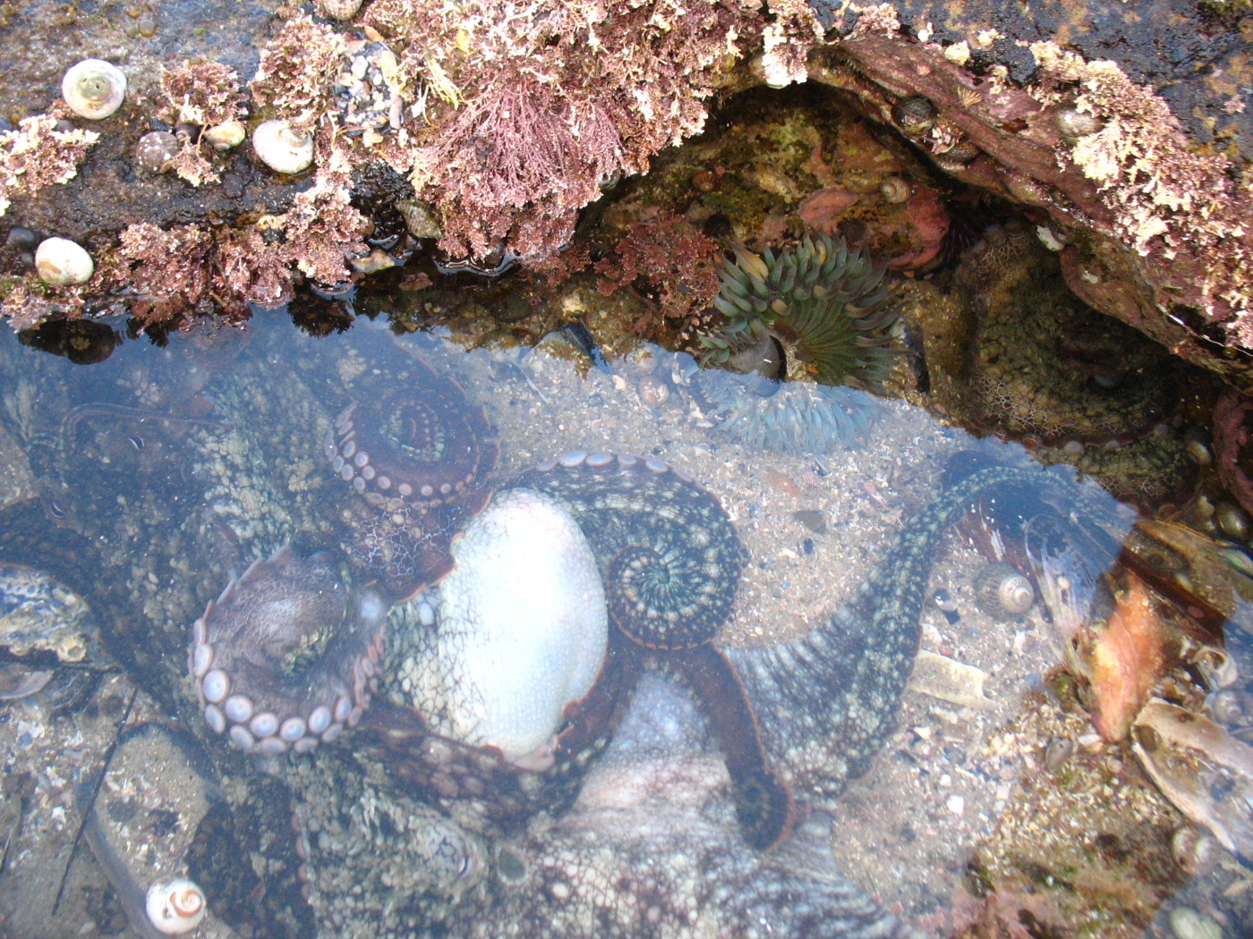 Marine Bio la jolla cove tide pools.jpg