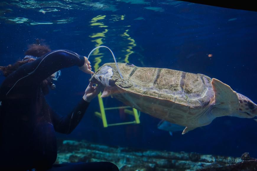 Marine Bio turtle.jpg