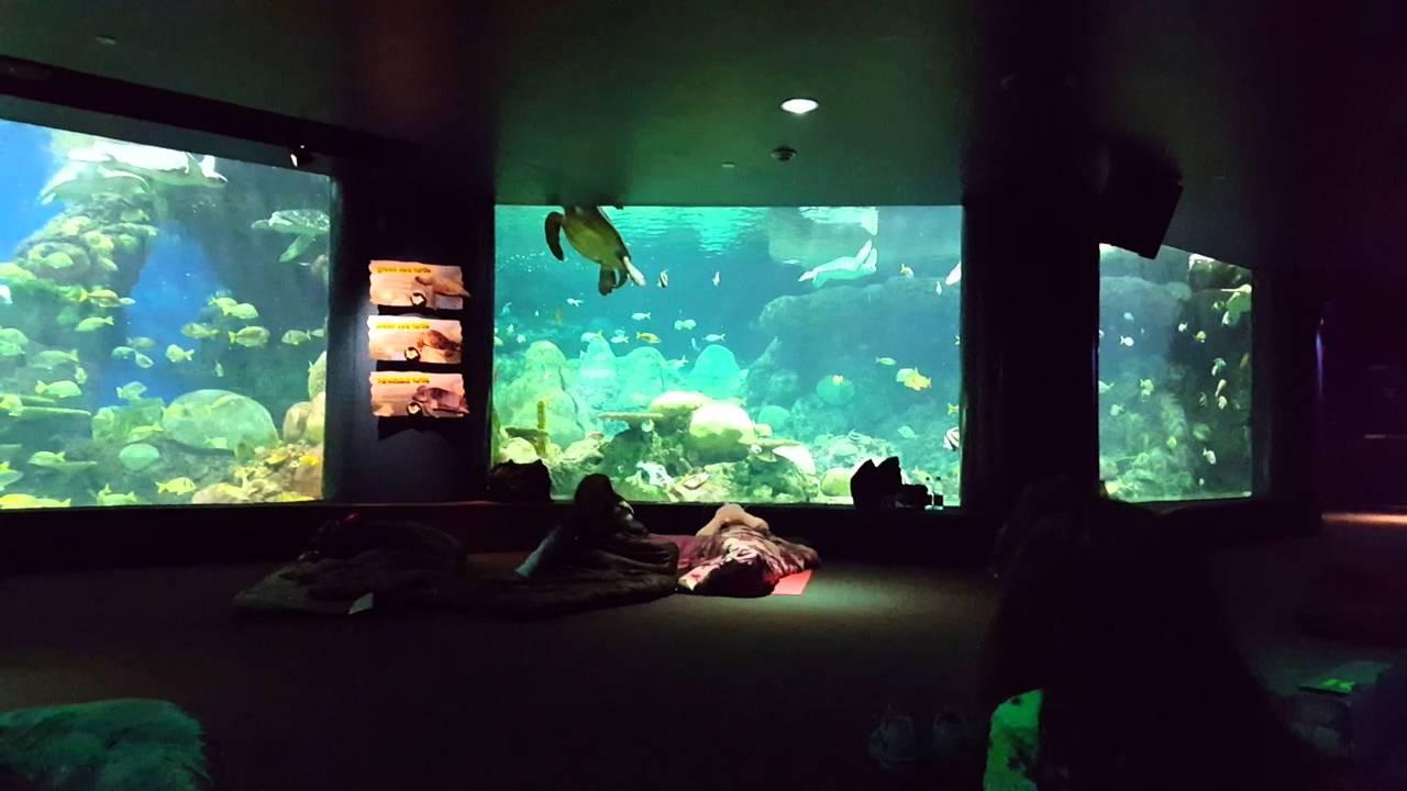 Seaworld sleepover 2.jpg