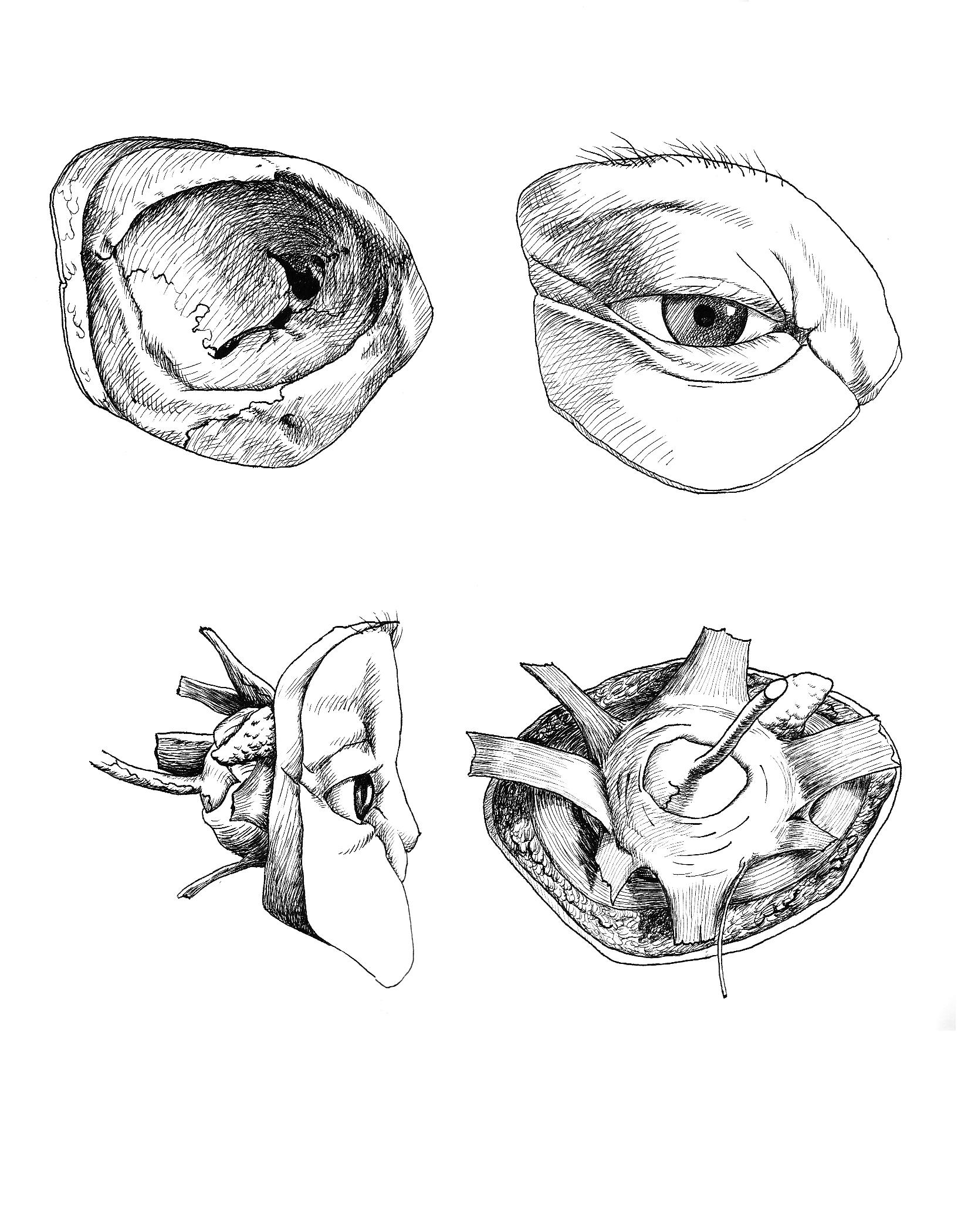 4. eye 1.jpg