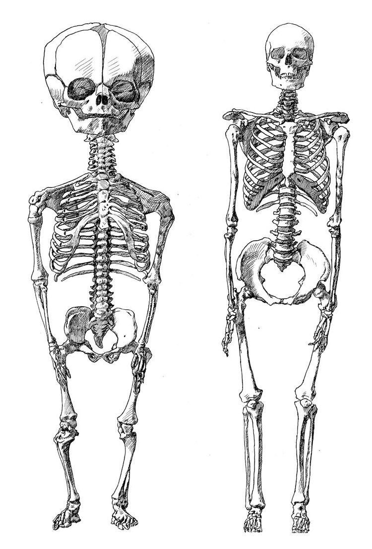 12. complete skeletons front.jpg