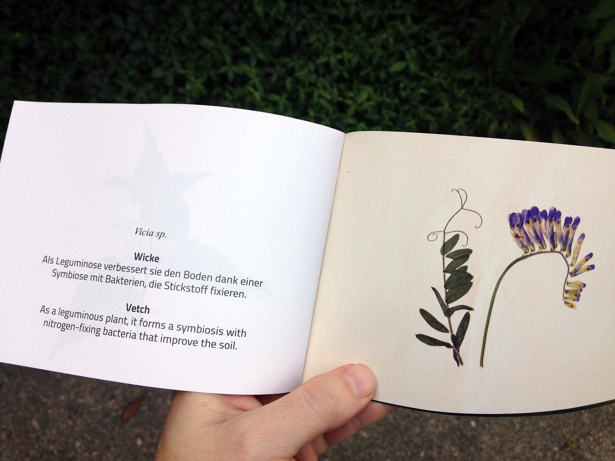 12_Herbarium-Vetch.jpg