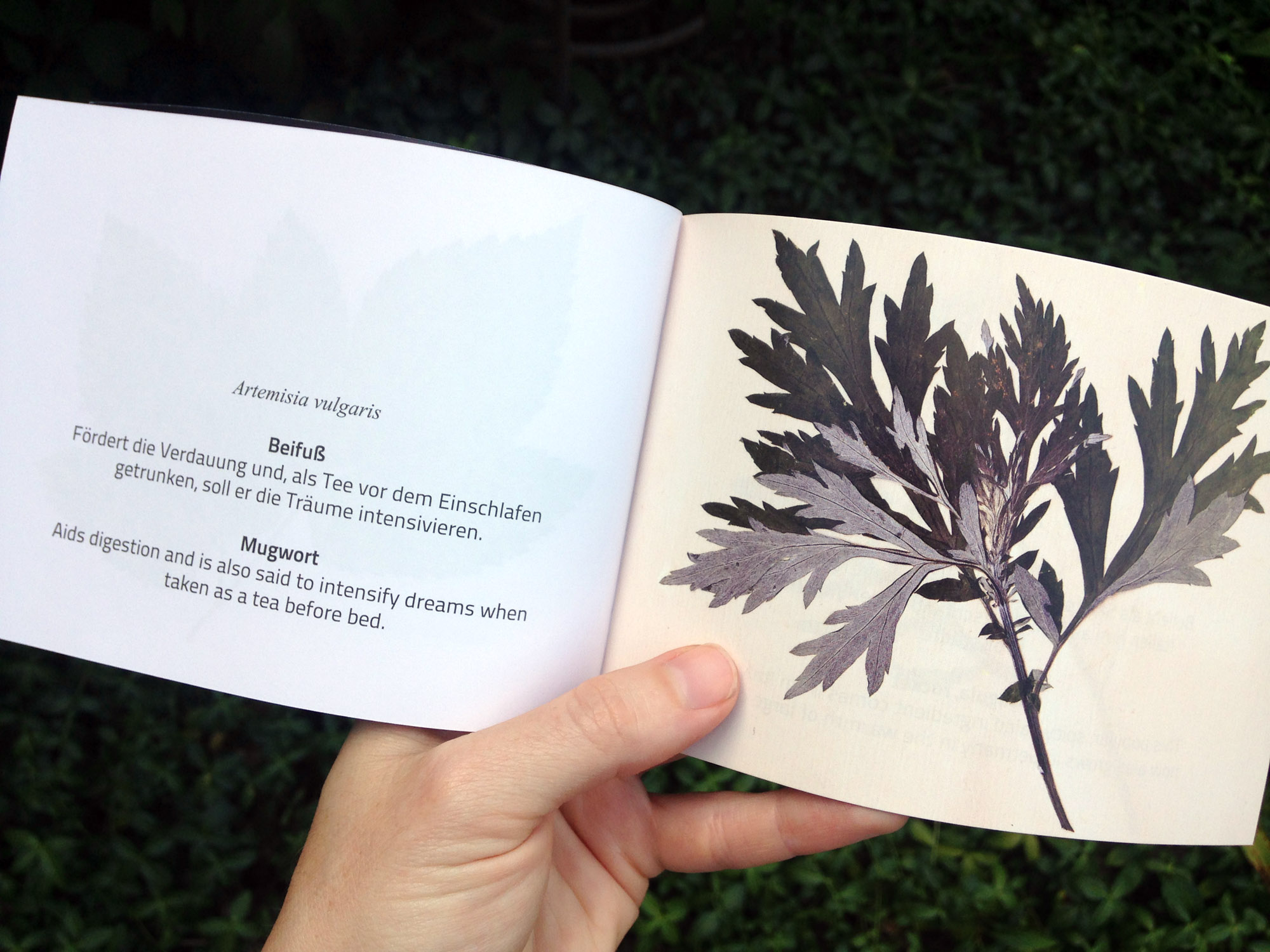 11_Herbarium_01.jpg