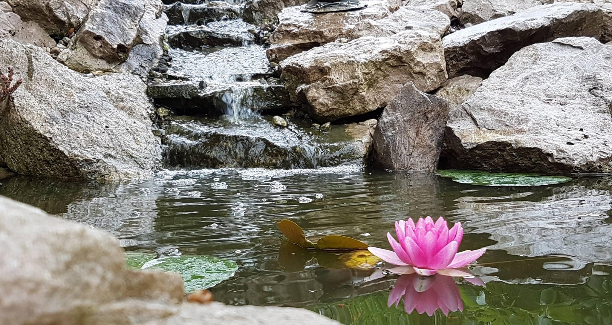 Pond at Maha Pura Yoga Studio.