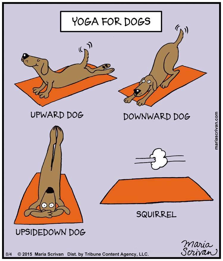 yoga meme blog 18.jpg