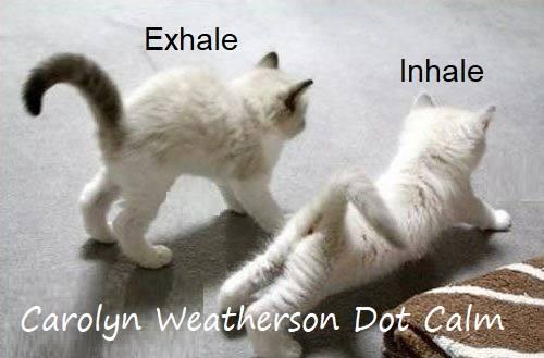 yoga meme blog 9.jpg