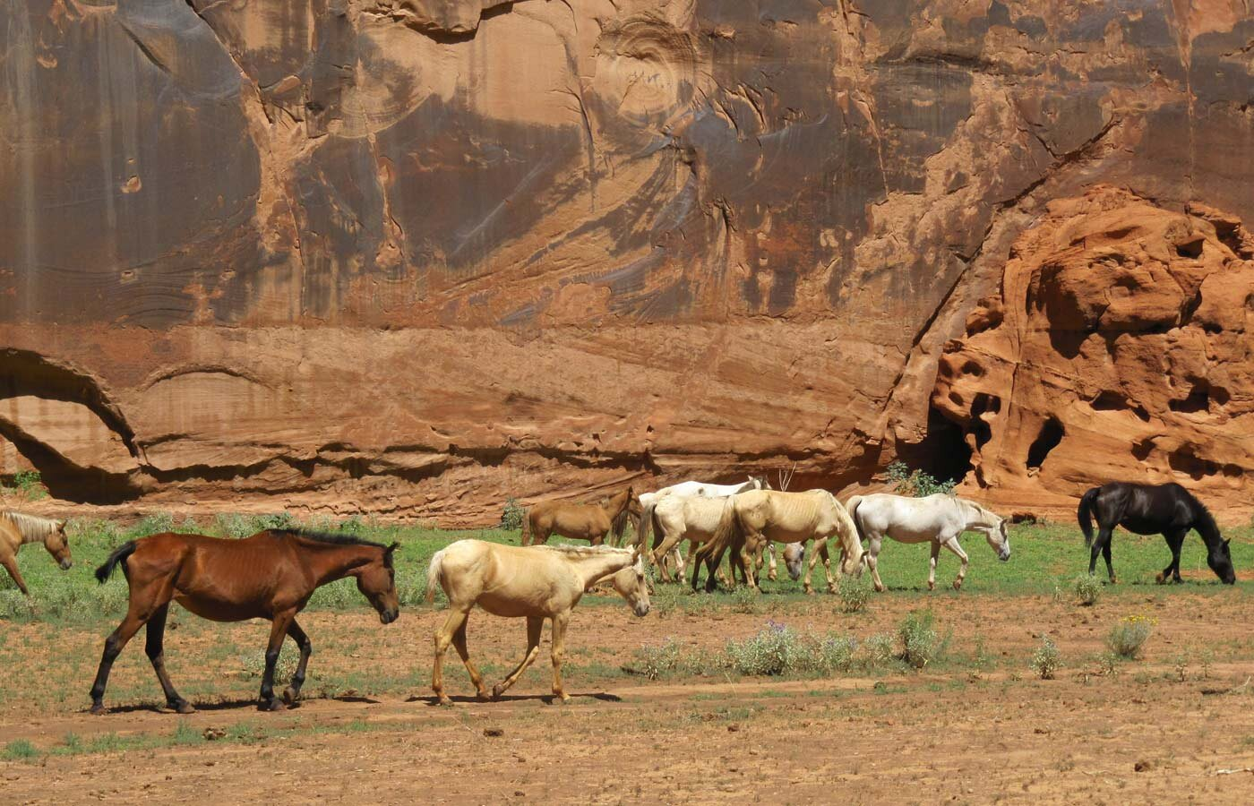 Medicine Horses - Navajo Land