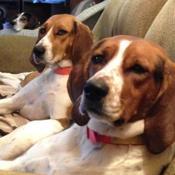 red-rock-hounds-testimonials