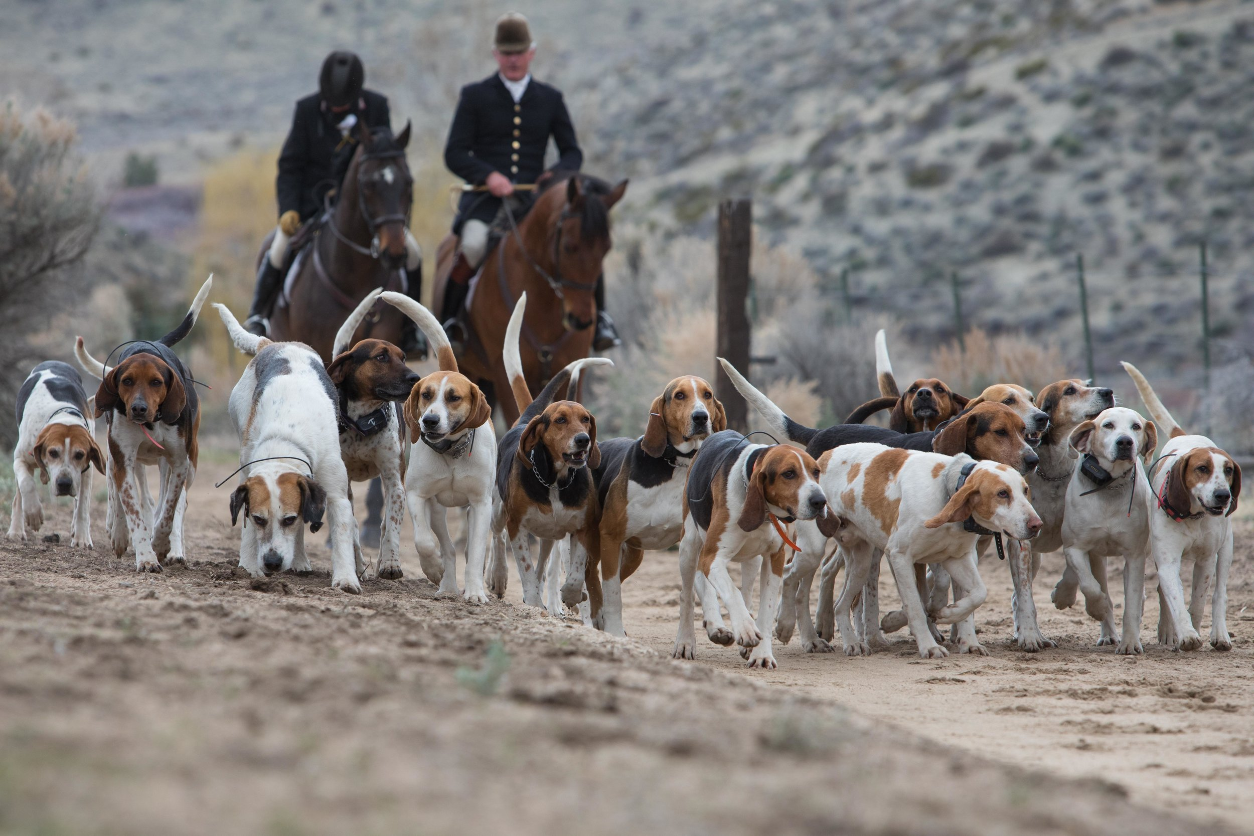 Red Rock Hounds Fox Hunting