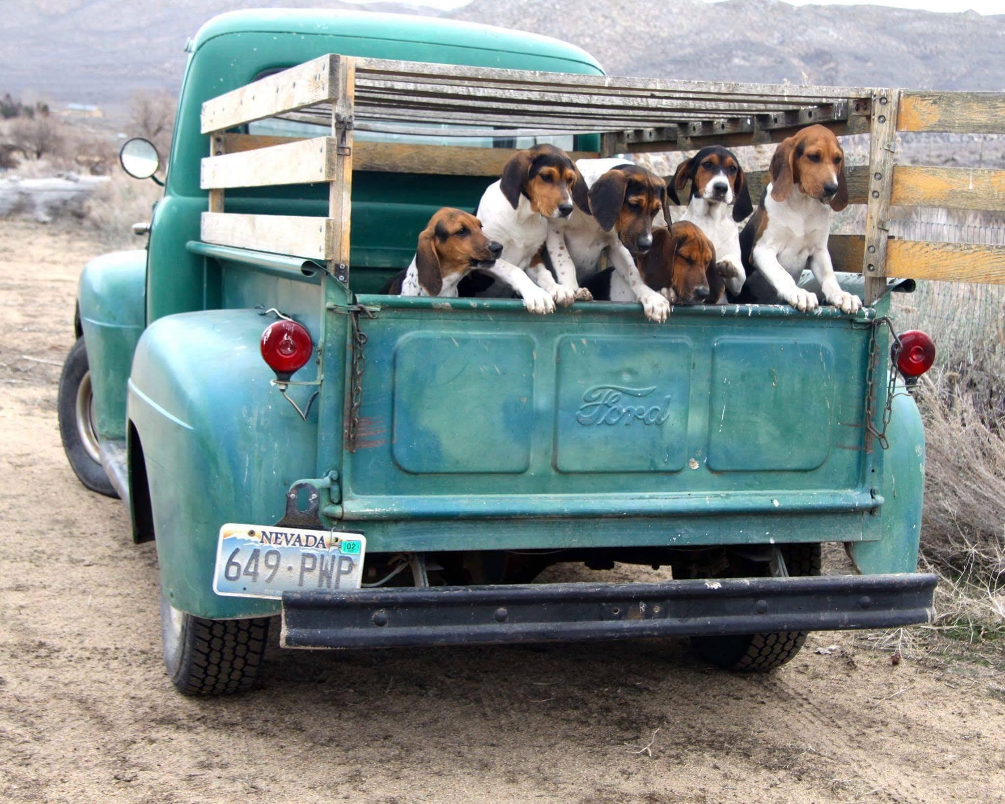 red-rock-hounds-puppy-truck
