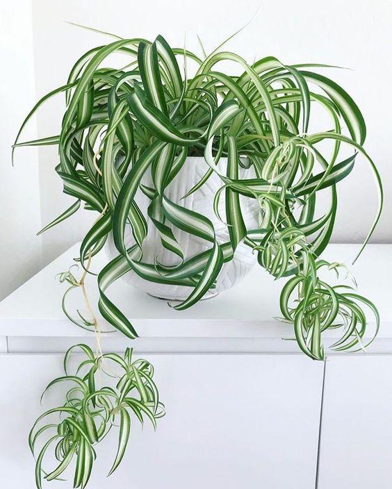 house plant 2.jpeg