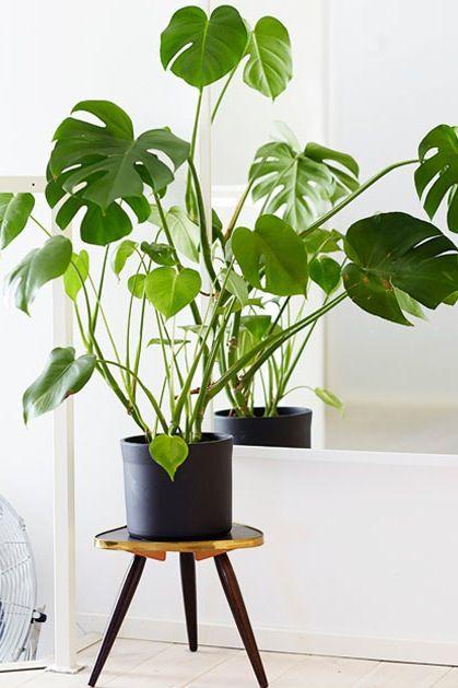 house plant 4.jpg
