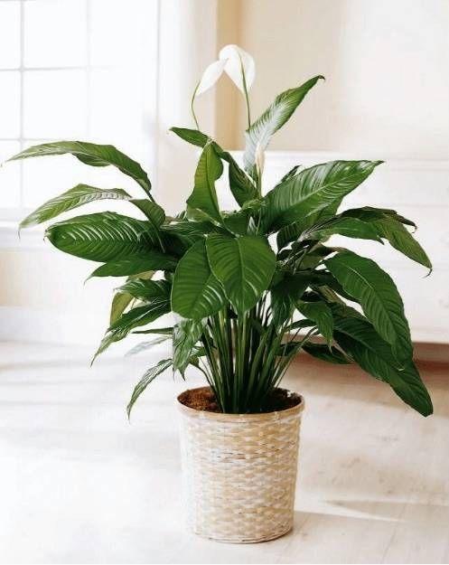 house plant 5.jpg