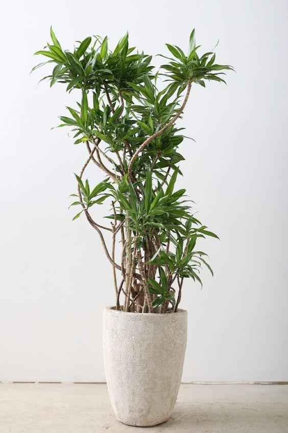 house plant 7.jpg