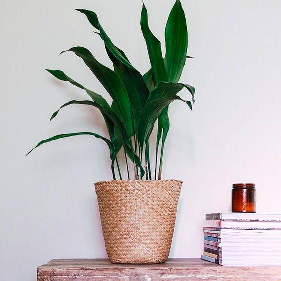 house plant 9.jpeg