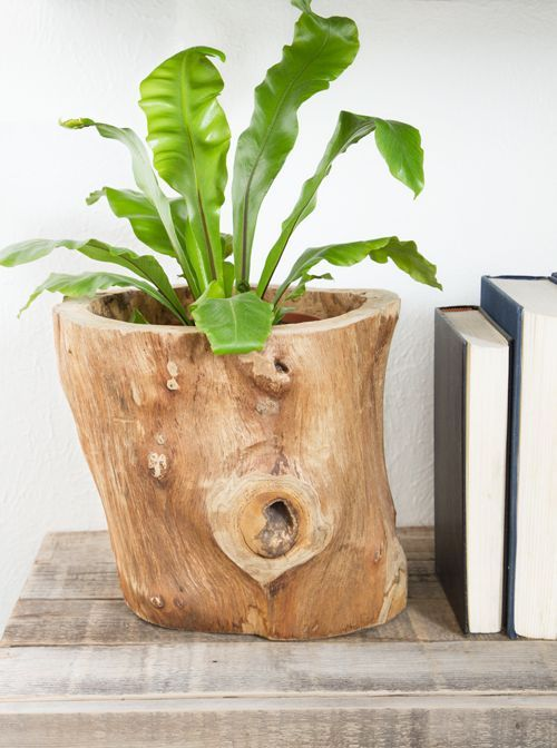 house plant 11.jpg