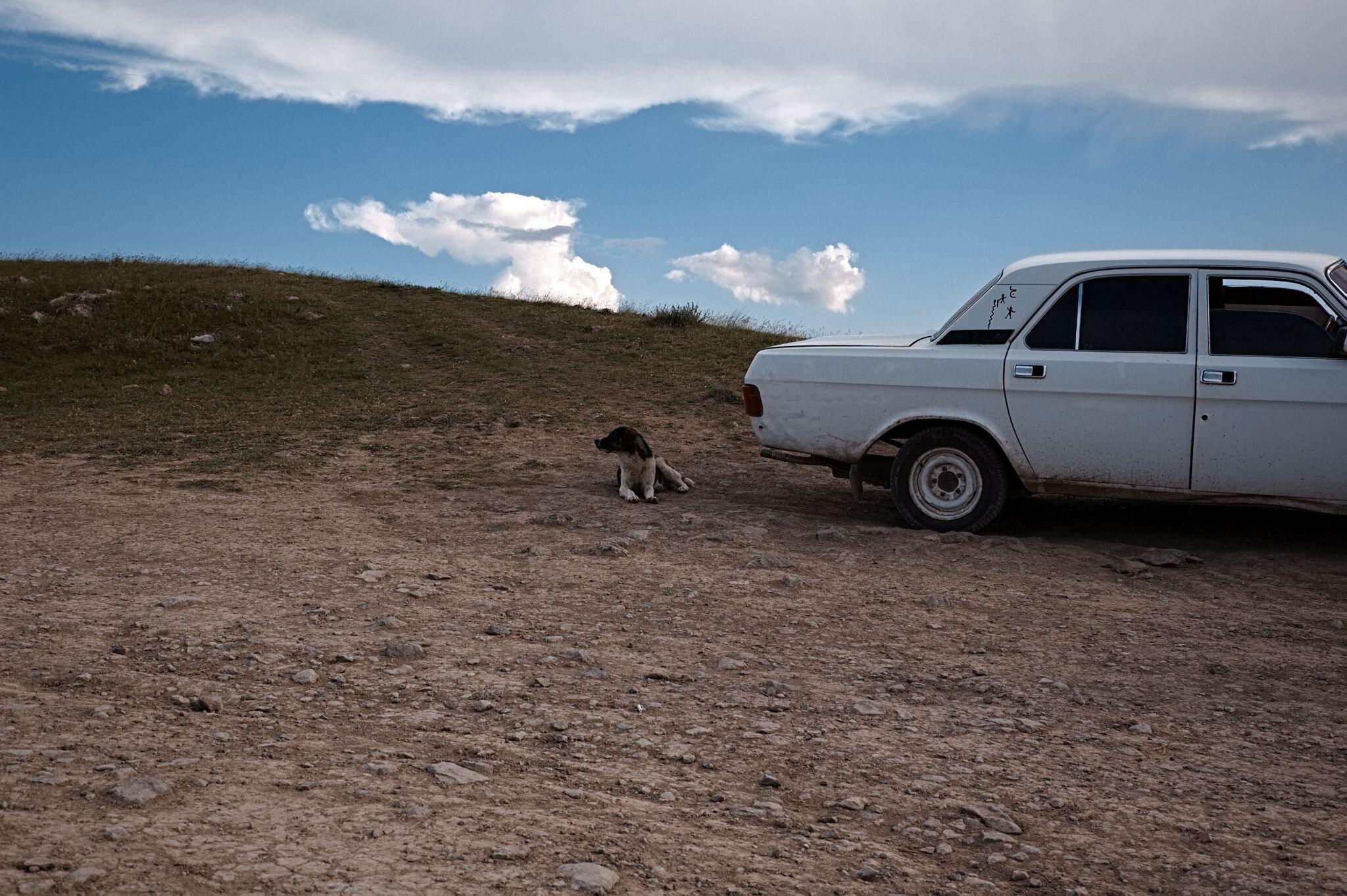 Hund neben weißem Auto