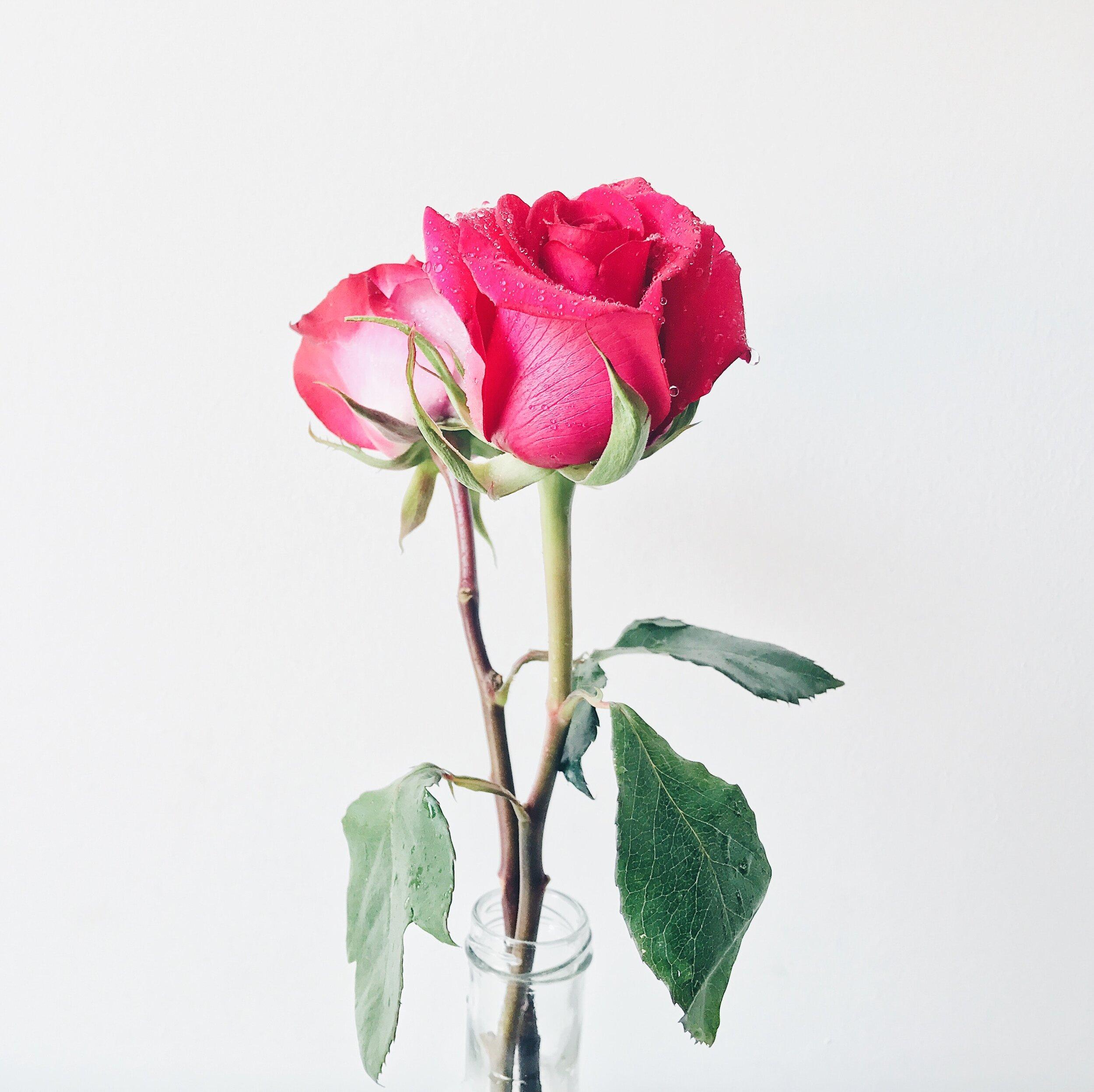 beautiful-bloom-blooming-1517358.jpg