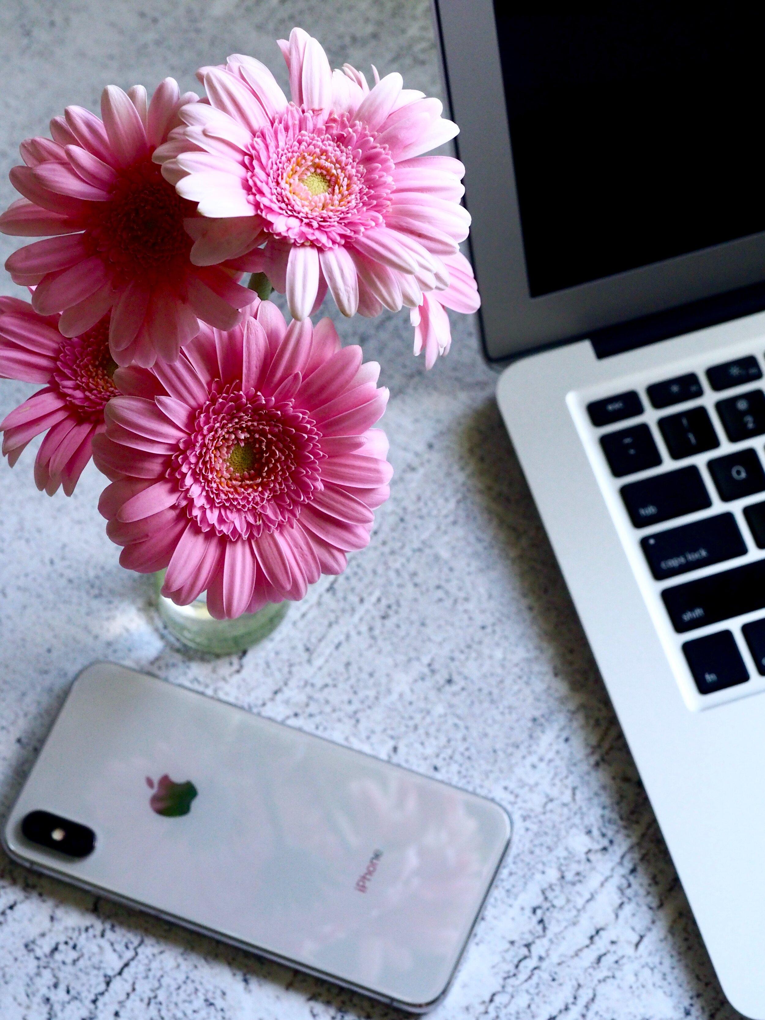 apple-bloom-blooming-850360.jpg